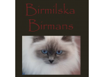 Birmilska Birmans - Birman Breeders - Central Coast, NSW