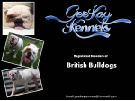 GeeKay Kennels - British Bulldog Breeder - Sydney, NSW