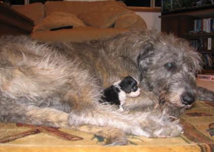 Brogue cuddling Fizgig (Puppy) gallery image