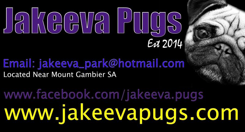 www.jakeevapugs.com