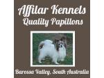 Afilar Kennels - Papillon Breeder - Adelaide, SA