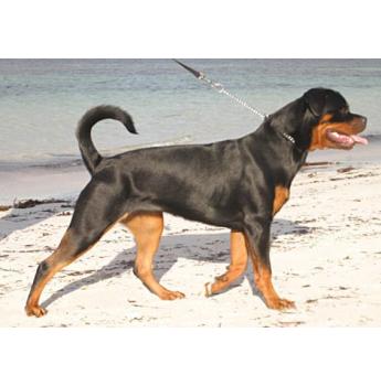 Adelaide Pet Dog Training Registration