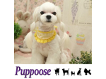 Puppoose -  Pet Boutique, Mobile Pet Styling, Online Store - Sydney