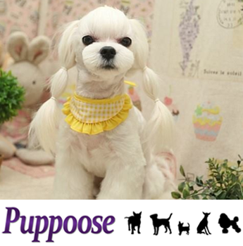 Puppoose Dog Grooming