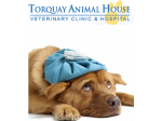 Torquay Animal House - Veterinary Clinic & Hospital - Melbourne