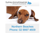Sydney Animal Hospital - Newport - Vet, Pet Boarding, Cattery, Puppy Pre-school - Northern Beaches Sydney