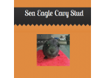 Sea Eagle Cavy Stud - Guinea Pig Breeder - Sydney, NSW