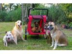 Classy Tails Pet Boutique - Pet Strollers & Trailers, Pet Steps & Ramps, Pet Beds, Clothing & Toys - Online Shop