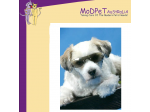 MoDPeT Australia - Wholesale Pet Products and Accessories