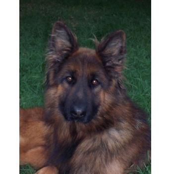 Dog Kennels Bowral