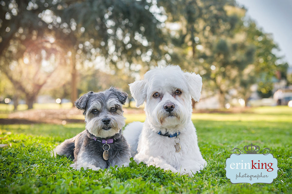 Doggy Friends Pet Photography gallery image