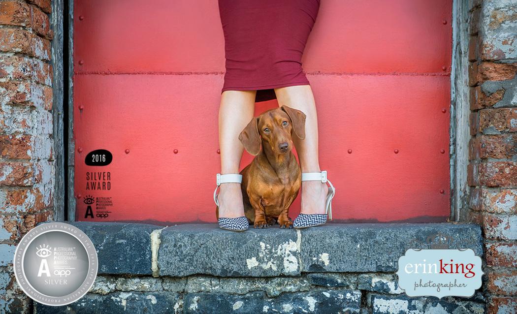 Award winning dachshund pet photography