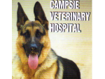 Campsie Veterinary Hospital - Vet, Pet Boarding & Day Care, Grooming - Sydney