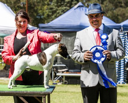 Best In Show 2013 Newcastle Int. Extravaganza gallery image
