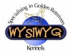 Wysiwyg - Golden Retriever & English Setter Breeder - Inala, Qld