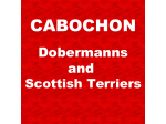 Cabochon - Dobermann Breeder, Scottish Terrier Breeder - Melbourne, VIC