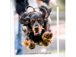 Roka Pet Photography - Melbourne