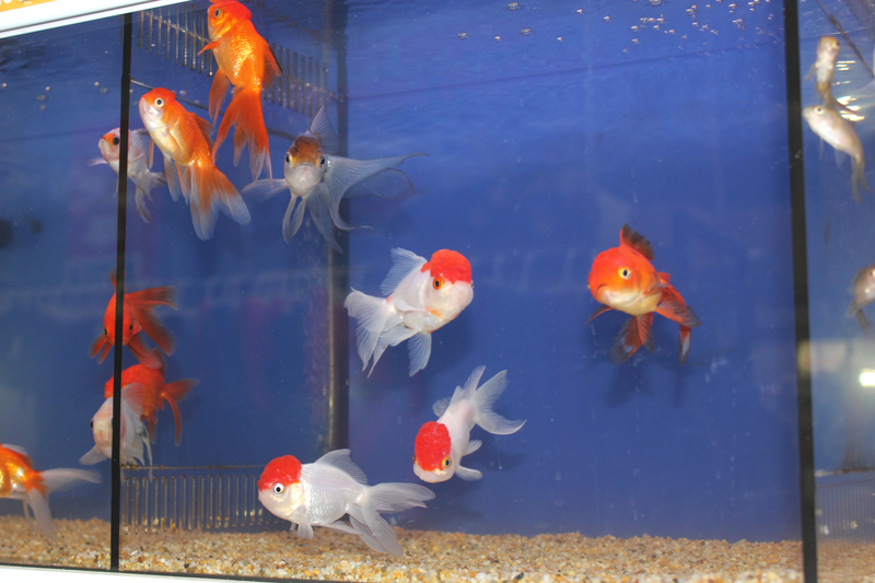 Live Fish gallery image