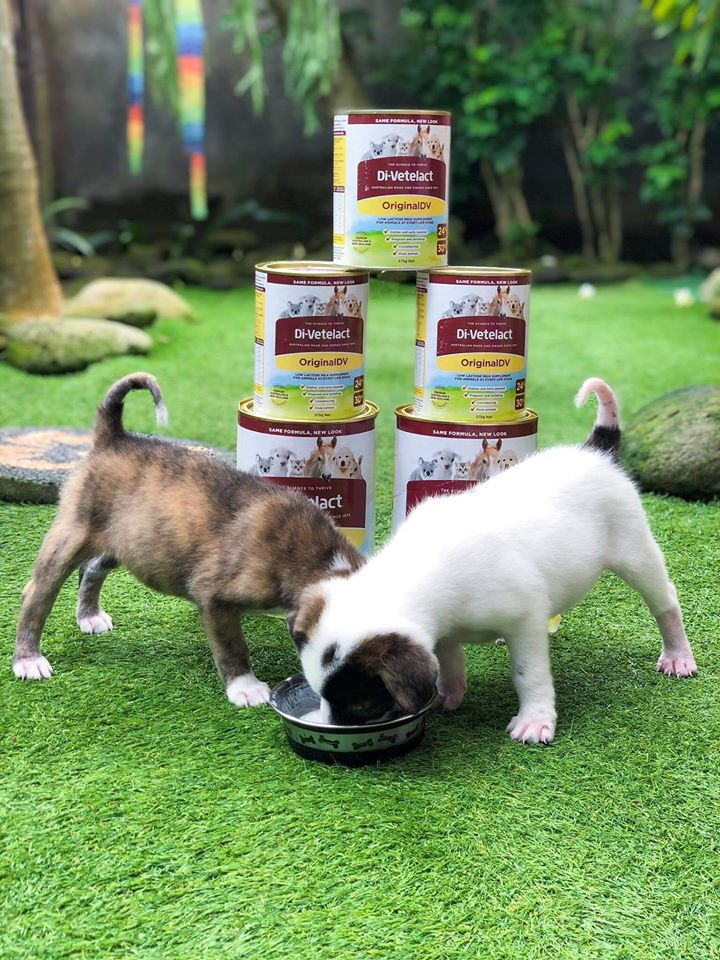 Act 4 Bali Dogs Donation gallery image