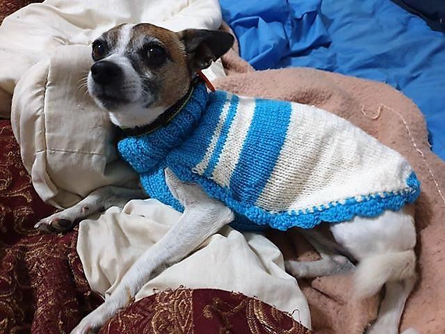 Warm & Happy Rescued Fur gallery image