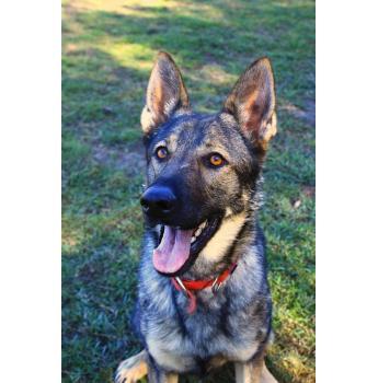 Guide Dog Rescue Brisbane