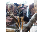 Dog Adventures - Dog Friendly Camp Sites and Adventures - Australia Wide