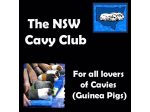 NSW Cavy Club - For all lovers of Cavies (Guinea Pigs)