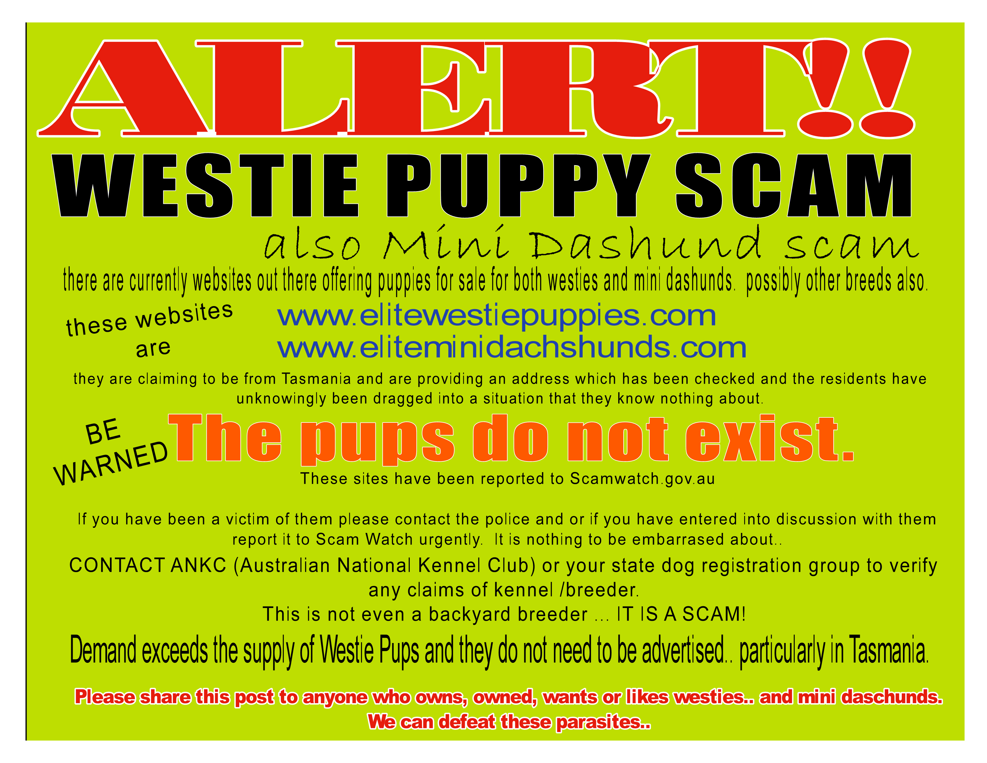 SCAMMERS ARE TARGETING TASMANIA - There are severa gallery image