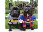Pet Threads - Online Pet Clothing & Costume Store