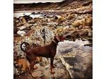 Pet Friendly Holiday Accommodation - Tasmania - Discover Bruny Island