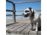Pet Friendly Accommodation Safety Beach, NSW-  Safety Beach Ocean Bungalows -