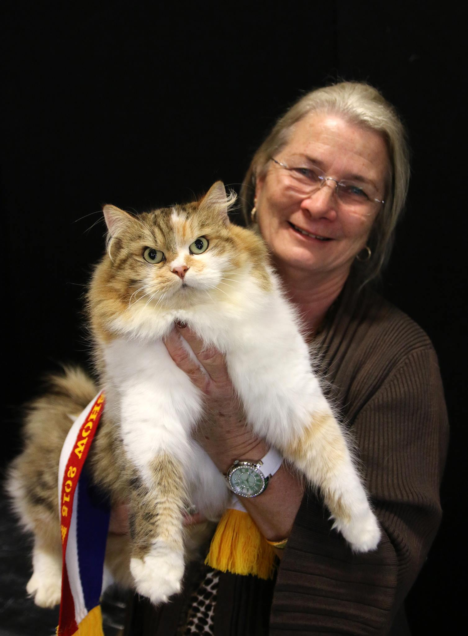 Miakoschka Jaromira wins the Brisbane Ekka 2014