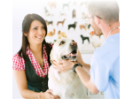Sussex Inlet Veterinary Surgery -  Vet, Cat Boarding, Puppy Preschool