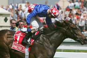 Melbourne Cup Winners - Makybe Diva