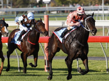 Black Caviar clearing away from her rivals in the 2012 Robert Sangster