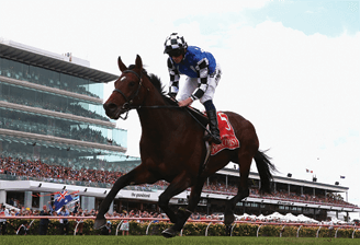 Protectionist Melbourne Cup 2015