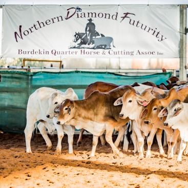 BQHCA Inc Northern Diamond Futurity 2018