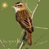 App_BirdSong