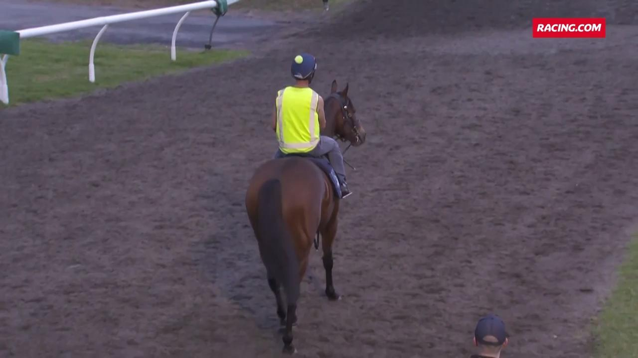 Viddora steps out at trackwork