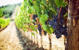 Tour door de wijngaarden van Toscane