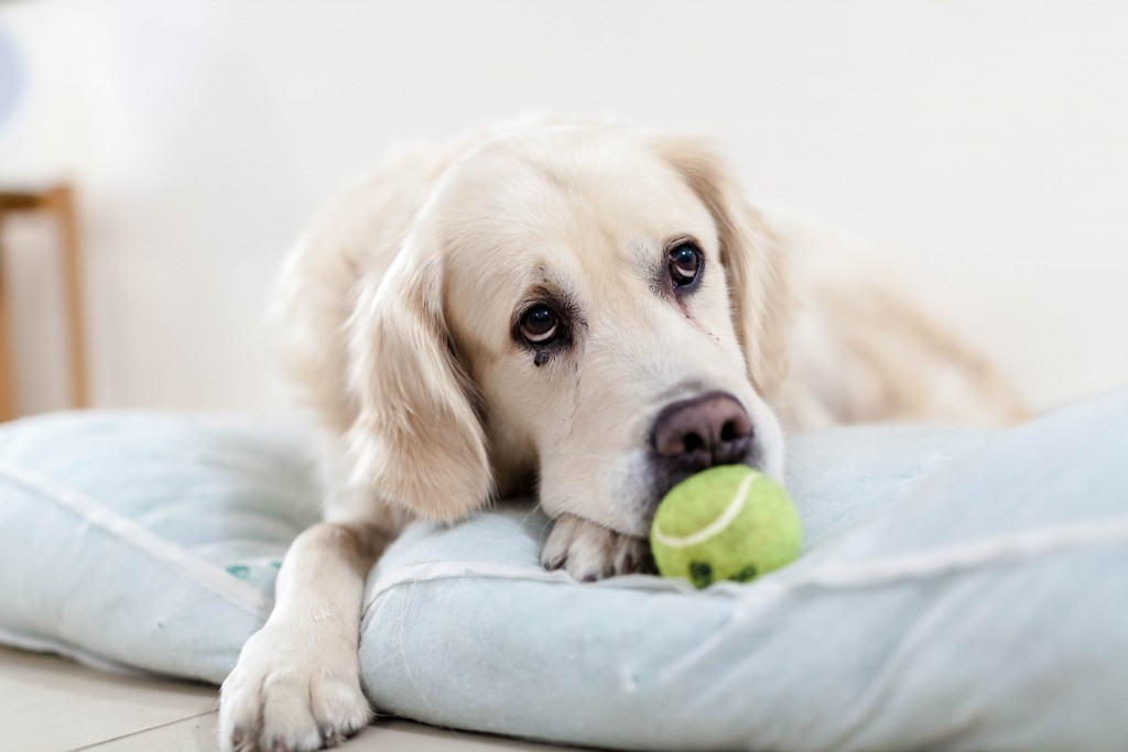 Rental Properties That Allow Large Dogs