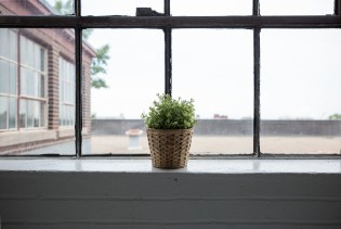 a window and a plant for sealing windows article