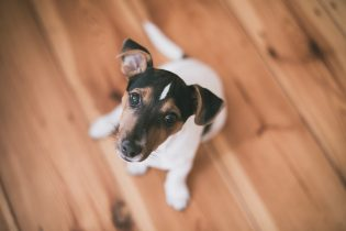 Renting with pets: 8 ways to pet-proof your home