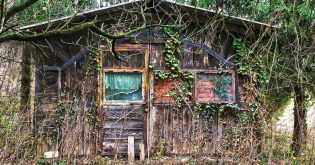 An old house in the woods with ivy running up its sides