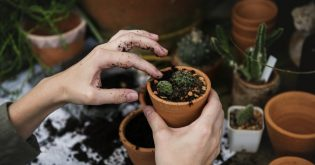 A woman's hands potting a succulent plant