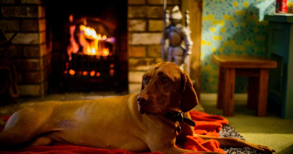 A dog sits by a fire