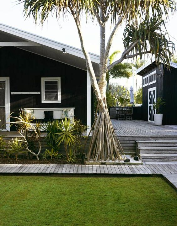 A Pandanus tree infront of a house