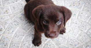 Top 15 best apartment dogs
