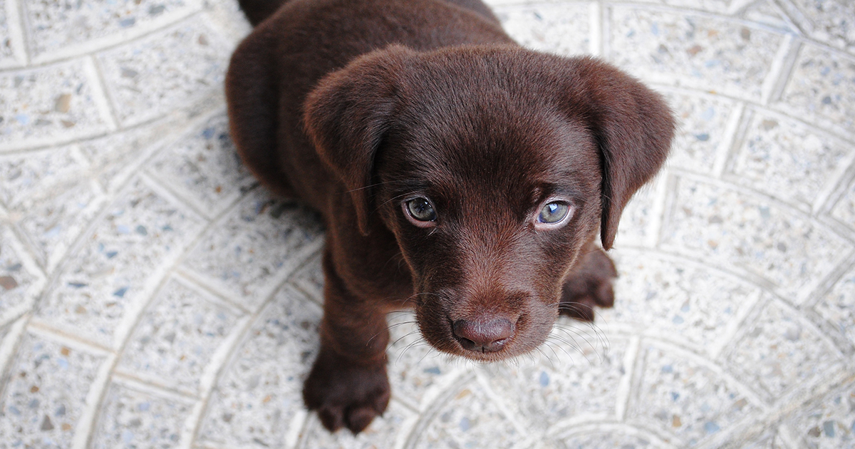 Top 15 Best Apartment Dogs Realestateview Com Au