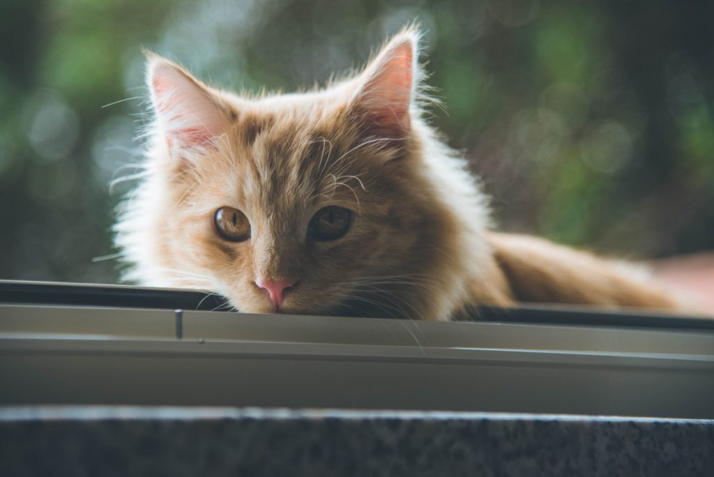 A cat looks through a window